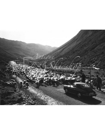 "Vintage Car Photo - ""Alpine Traffic"""